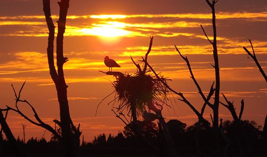 bird and birdnest at sunset